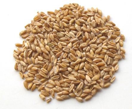 浮 小 麦